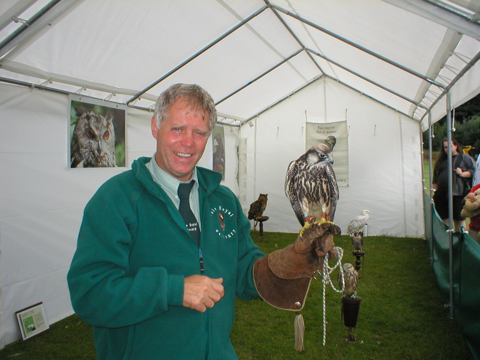 Falconry Displays & Events