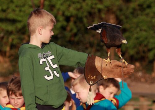 Junior Birds of Prey Experience
