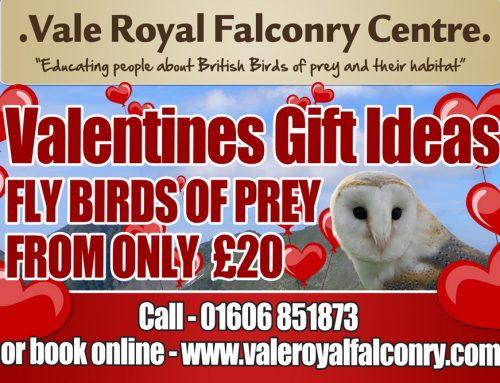 Owl always love you Valentine!