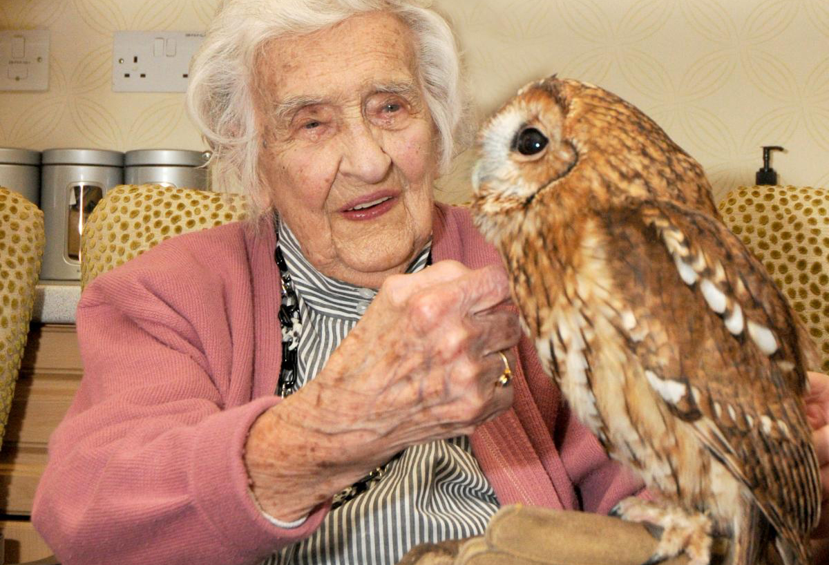 Care Home Falconry Experience