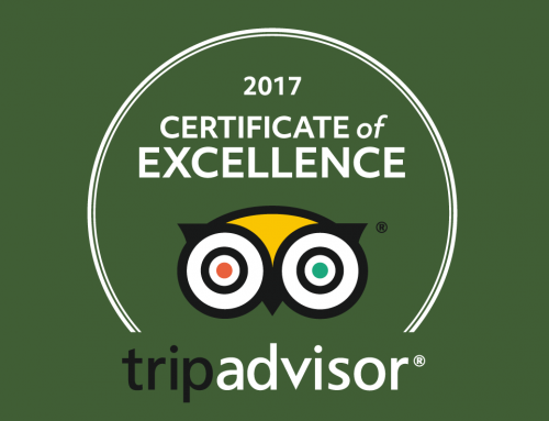 Vale Royal Falconry Centre just earned a 2017 Certificate of Excellence.
