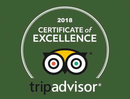 Vale Royal Falconry Centre just earned a 2018 Certificate of Excellence.
