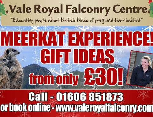 Special Meerkat gift ideas for Christmas!